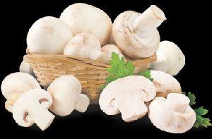 Premium Button Mushroom