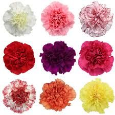 Natural Carnation Flowers