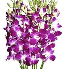 Natural Orchid Flowers