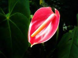Natural Thorium Flowers