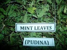 Dry Mint Leaves