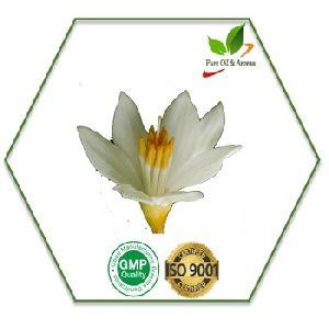 Aromacare Healthy Aromatherapy Oil
