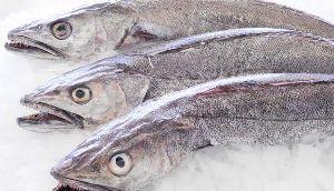 Frozen Merluccius Capensis Fish