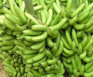 Banana Fruit Plants