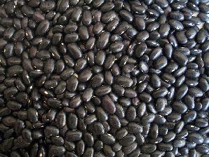 Black Kidney Beans / Black Beans