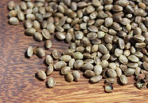 Top Shelled Hemp Seeds