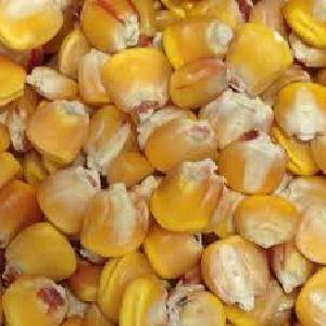Golden Corn Seeds