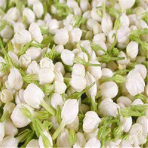Dry Jasmine Flower