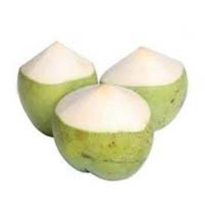 Tender Coconut Suppliers & Wholesalers | Buy Hara Nariyal, Tender