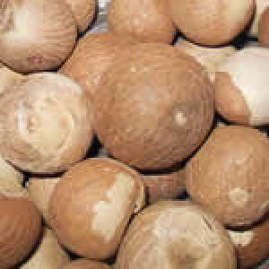 Betel Areca Nut