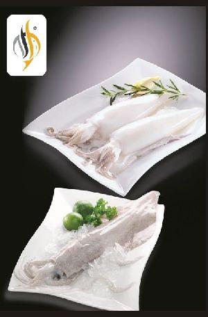 Frozen Squid Fish
