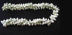 Jasmine Flower Strings