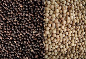 Black Pepper Seeds, White Pepper Seeds