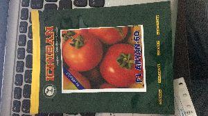 F1 Aryan-60 Hybrid Tomato Seeds