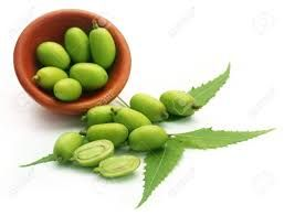 Neem Fresh Fruit