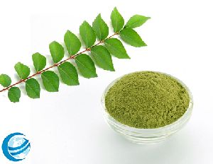 Curry Leaves in Chennai - Manufacturers and Suppliers India