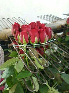 Cut Rose
