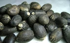 Jatropha Seeds