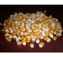 White Maize Corn
