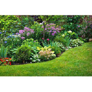 Plant Landscaping Services