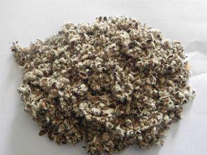 Cottonseed Hulls