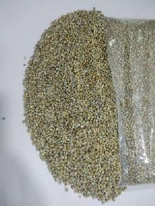 Indian Pearl Millet