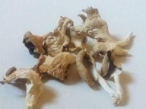 Dried Oyster Mushroom