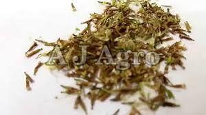Herbal Stevia Seeds