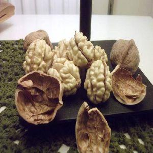 Walnut Shells