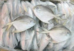 Chilled Pomfret Fish
