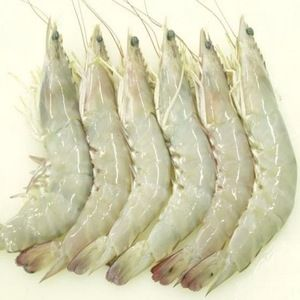 Chilled Whiteleg Shrimp