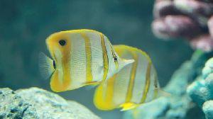 Fresh Coral Fish