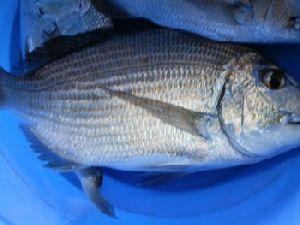 Fresh Indian Sea Food