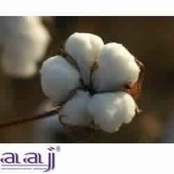 tanzania cotton