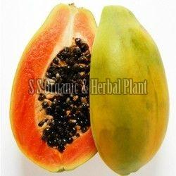 Fresh Organic Papaya