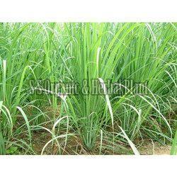 Natural Lemongrass