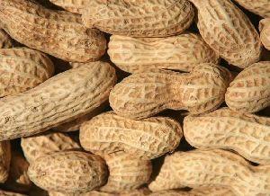 African Groundnut