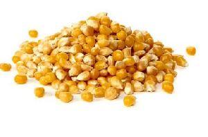 Yelloow Corn Seeds