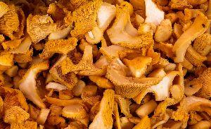 Dry-oyster-mushroom