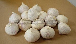 Fresh Solo Garlic
