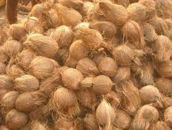 Fresh Semi Husked Coconut