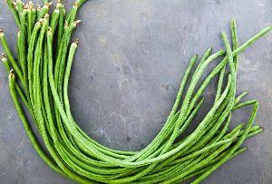 Fresh Green Long Beans