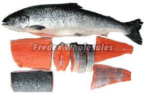 Frozen Salmon Fish 01