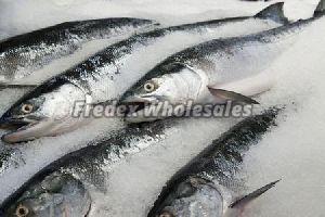 Frozen Salmon Fish 02