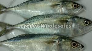 Frozen Salmon Fish 03