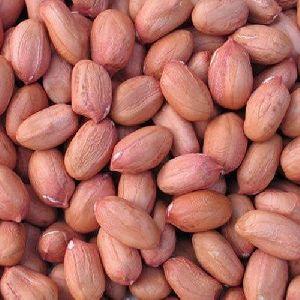 Java Ground Nut