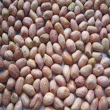 Peanut Ground Nut