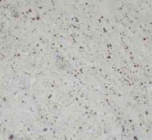 Amba White Granites