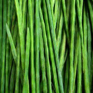 Fresh Green Drumsticks