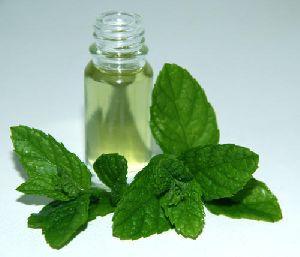 Mentha Essential Oil